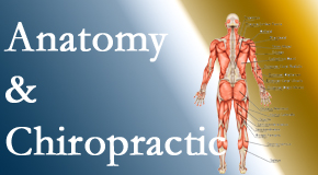 Layden Chiropractic proudly delivers chiropractic care based on knowledge of anatomy to diagnose and treat spine related pain.