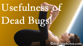 Layden Chiropractic finds dead bugs quite useful in the healing process of Plainville back pain for many chiropractic patients.